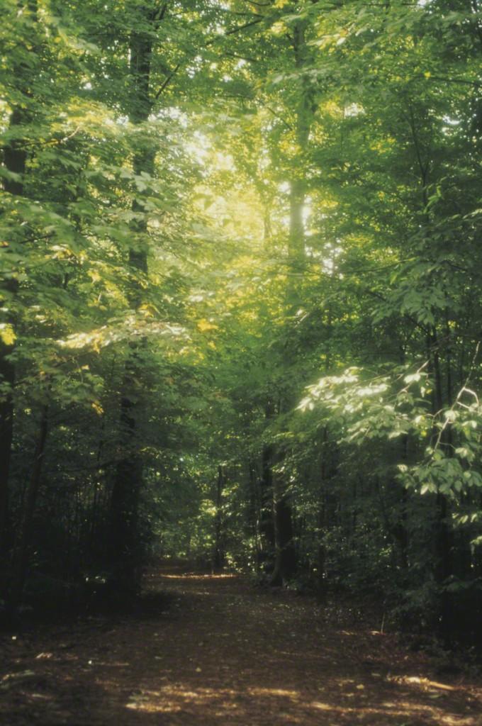 sacred-grove-402378-print
